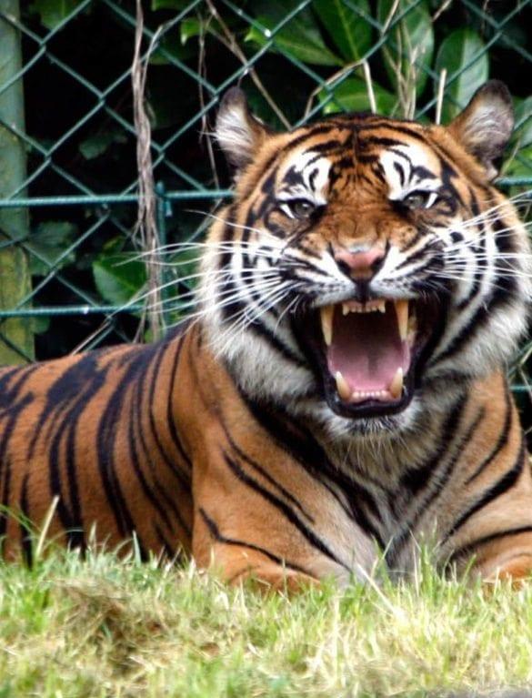 Dublin Zoo Hotel Deals